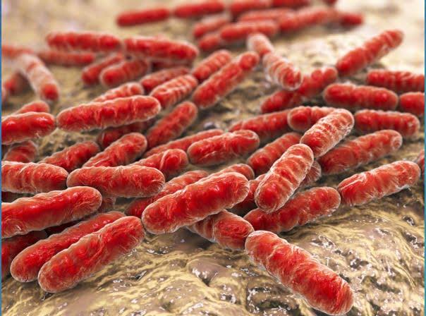 Sinbiyotik Nedir